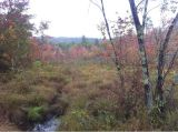 Leaf Peepers, Rejoice! A Foliage Update from the LitchfieldHills