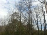 Fall Foliage Update from the LitchfieldHills